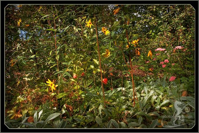 Garten Eden 11