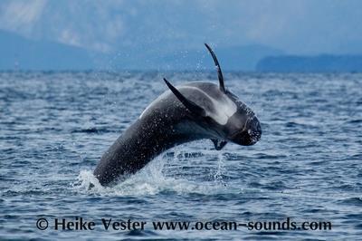ocean sound2